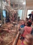 Wycieczka do Muzeum Przyrody_14